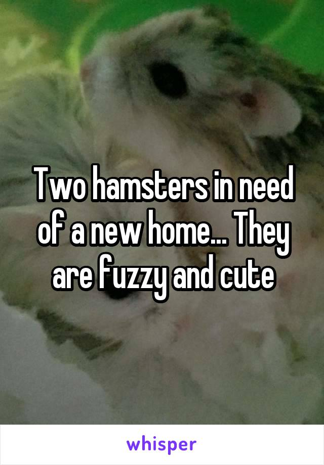 Two hamsters in need of a new home... They are fuzzy and cute
