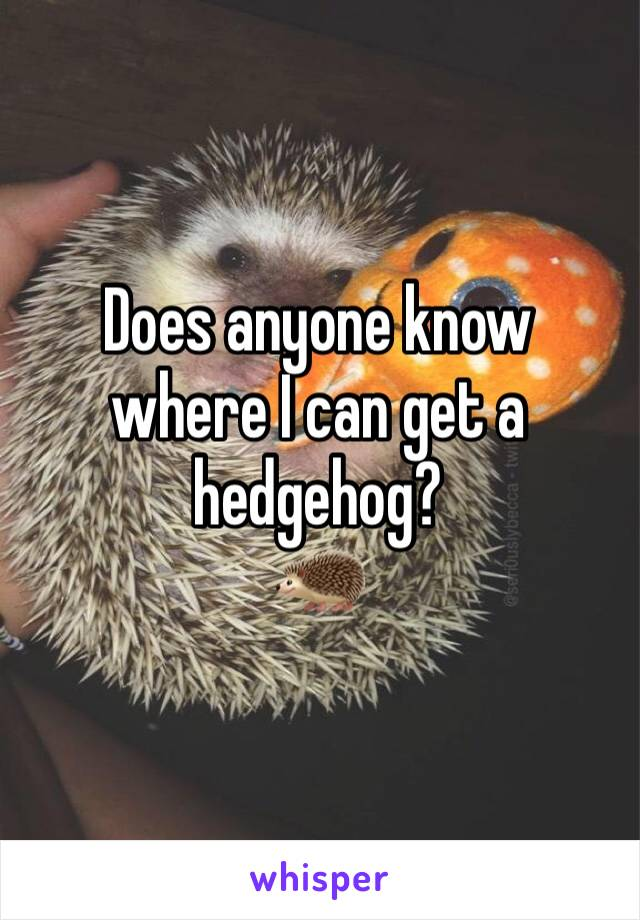 Does anyone know where I can get a hedgehog?  🦔