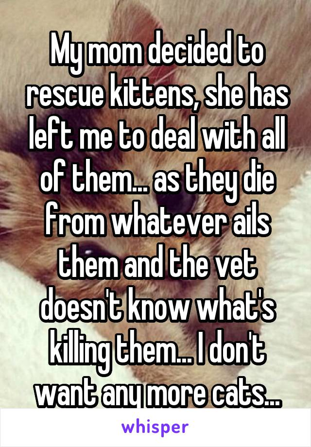 My mom decided to rescue kittens, she has left me to deal with all of them... as they die from whatever ails them and the vet doesn't know what's killing them... I don't want any more cats...