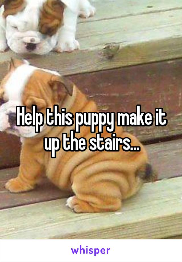 Help this puppy make it up the stairs...