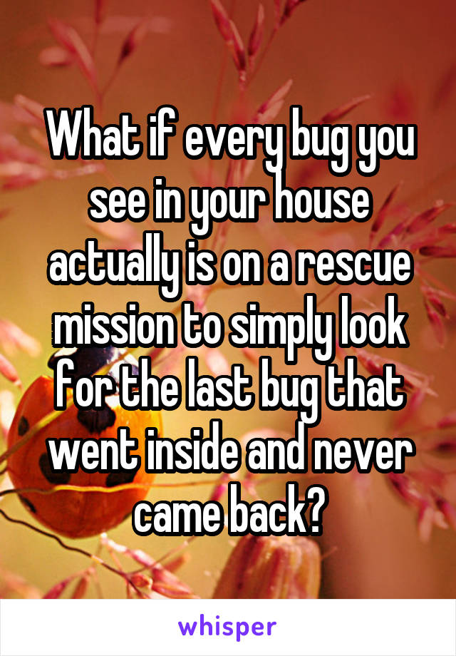 What if every bug you see in your house actually is on a rescue mission to simply look for the last bug that went inside and never came back?