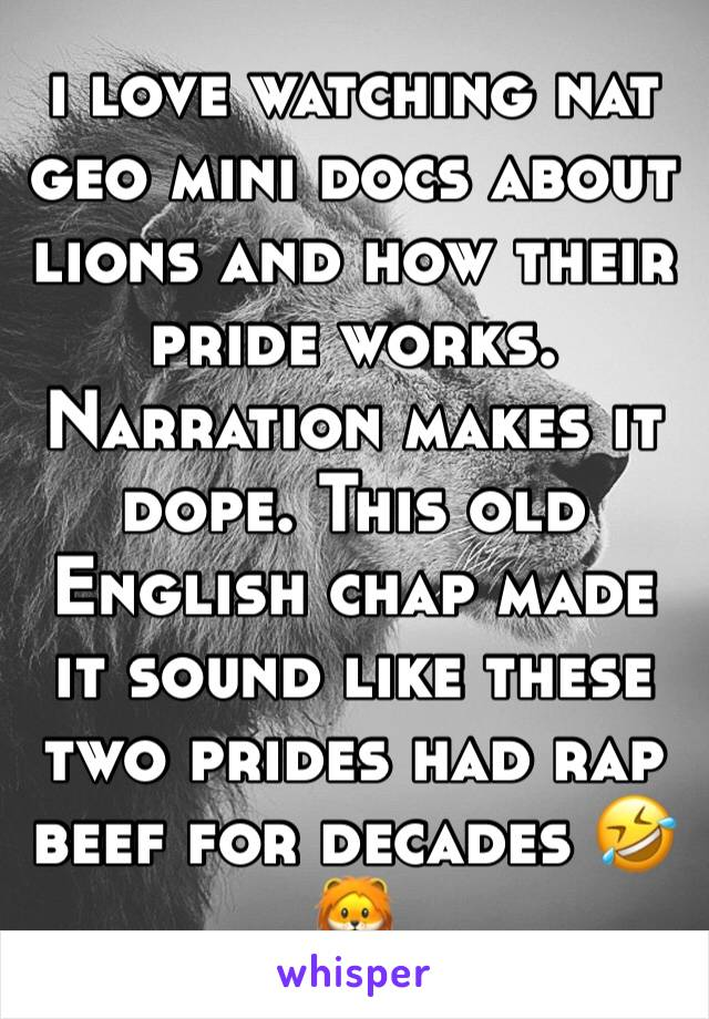 i love watching nat geo mini docs about lions and how their pride works. Narration makes it dope. This old English chap made it sound like these two prides had rap beef for decades 🤣🦁