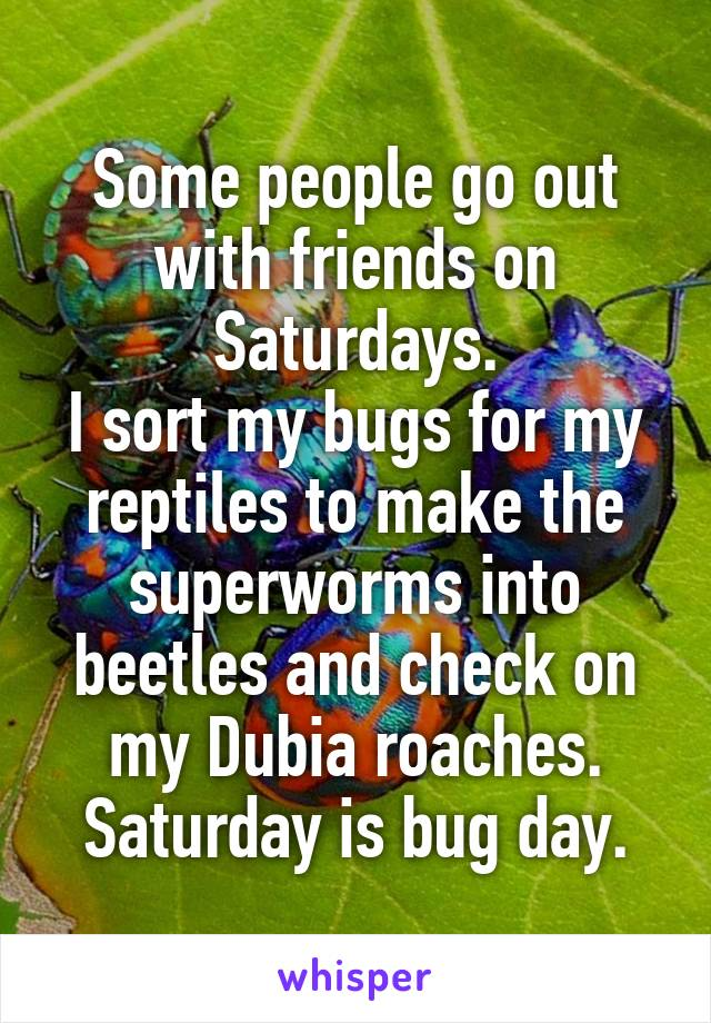 Some people go out with friends on Saturdays. I sort my bugs for my reptiles to make the superworms into beetles and check on my Dubia roaches. Saturday is bug day.