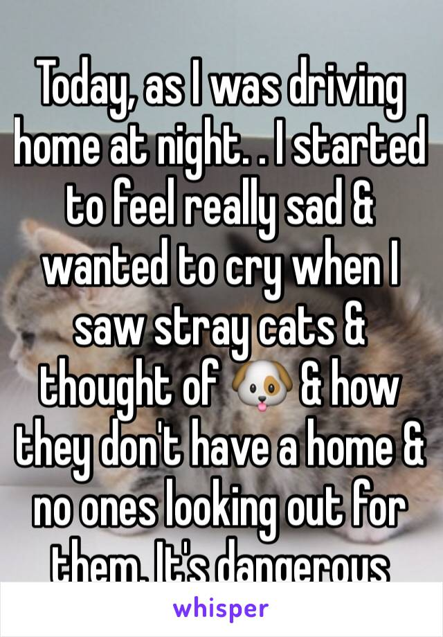 Today, as I was driving home at night. . I started to feel really sad & wanted to cry when I saw stray cats &  thought of 🐶 & how they don't have a home & no ones looking out for them. It's dangerous