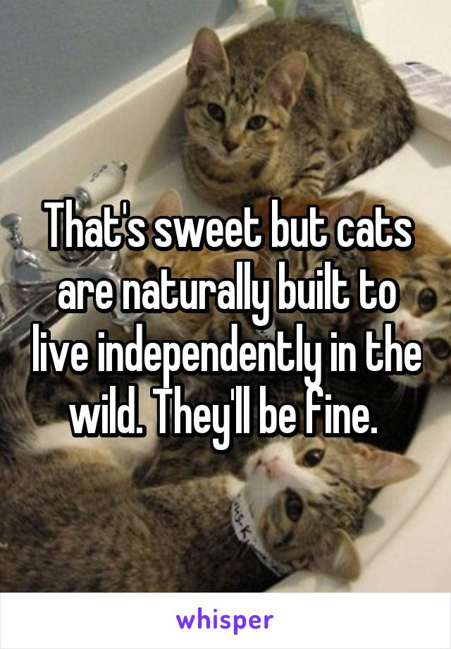 That's sweet but cats are naturally built to live independently in the wild. They'll be fine.