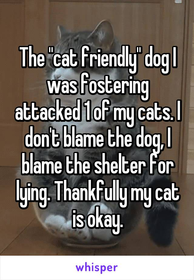 "The ""cat friendly"" dog I was fostering attacked 1 of my cats. I don't blame the dog, I blame the shelter for lying. Thankfully my cat is okay."