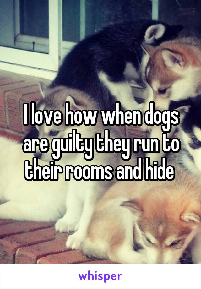 I love how when dogs are guilty they run to their rooms and hide