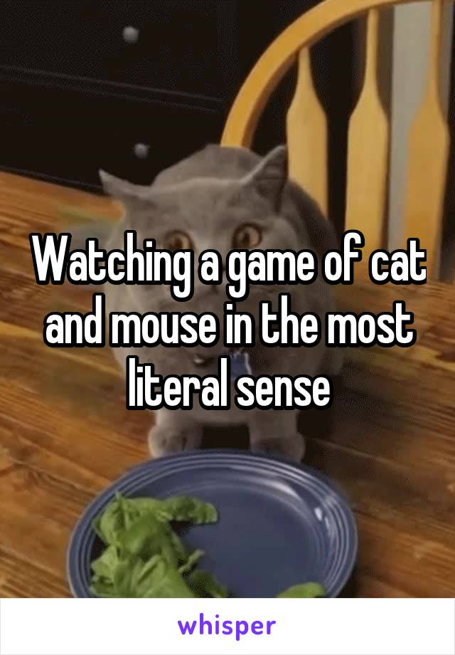 Watching a game of cat and mouse in the most literal sense