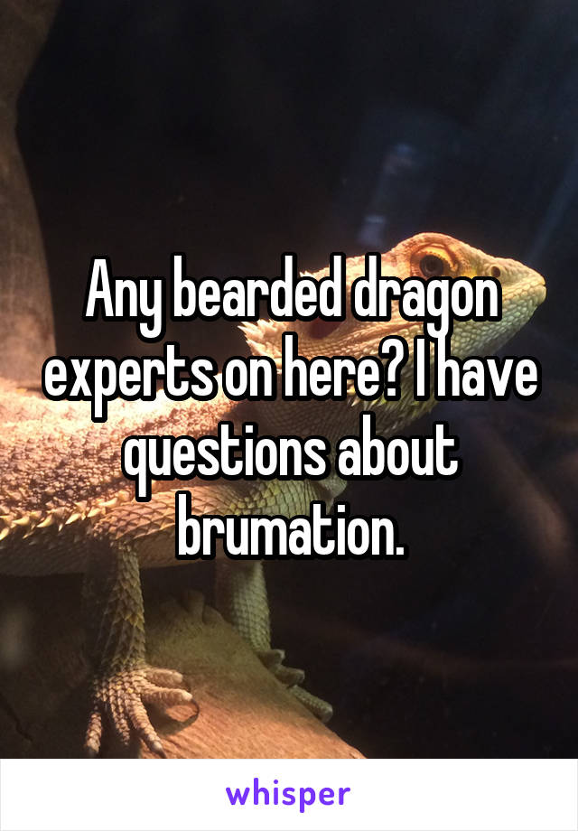 Any bearded dragon experts on here? I have questions about brumation.