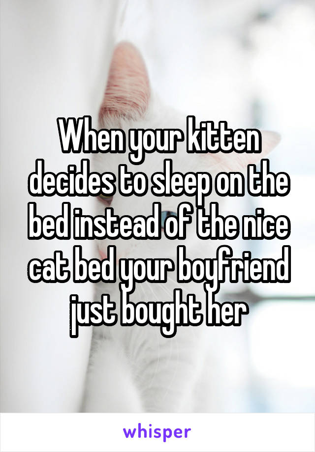 When your kitten decides to sleep on the bed instead of the nice cat bed your boyfriend just bought her