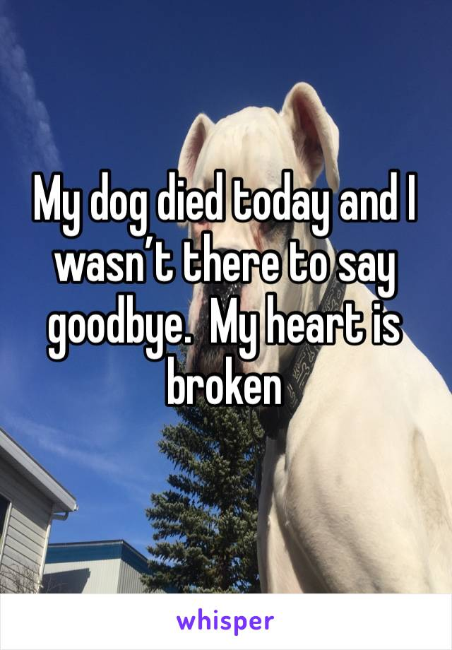 My dog died today and I wasn't there to say goodbye.  My heart is broken