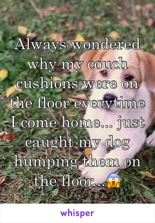 Always wondered why my couch cushions were on the floor everytime I come home... just caught my dog humping them on the floor...😱