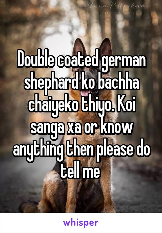 Double coated german shephard ko bachha chaiyeko thiyo. Koi sanga xa or know anything then please do tell me