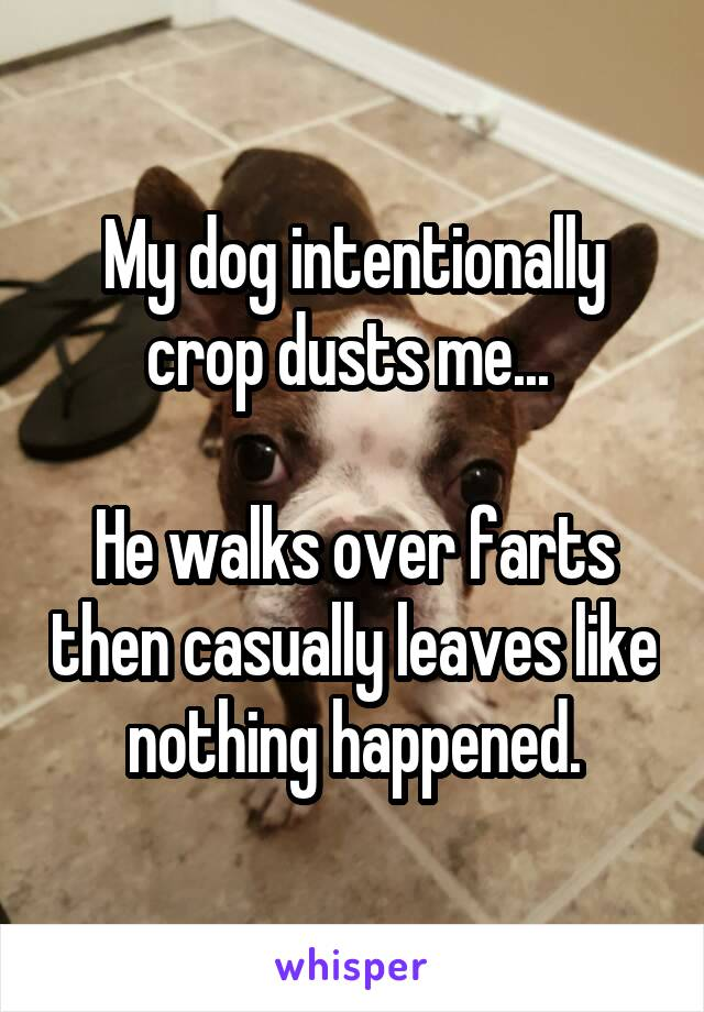 My dog intentionally crop dusts me...   He walks over farts then casually leaves like nothing happened.