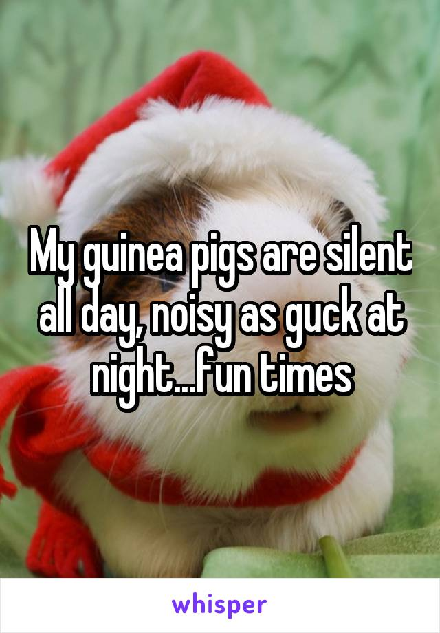 My guinea pigs are silent all day, noisy as guck at night...fun times
