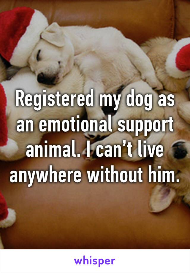 Registered my dog as an emotional support animal. I can't live anywhere without him.