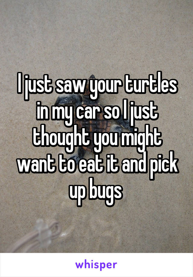 I just saw your turtles in my car so I just thought you might want to eat it and pick up bugs