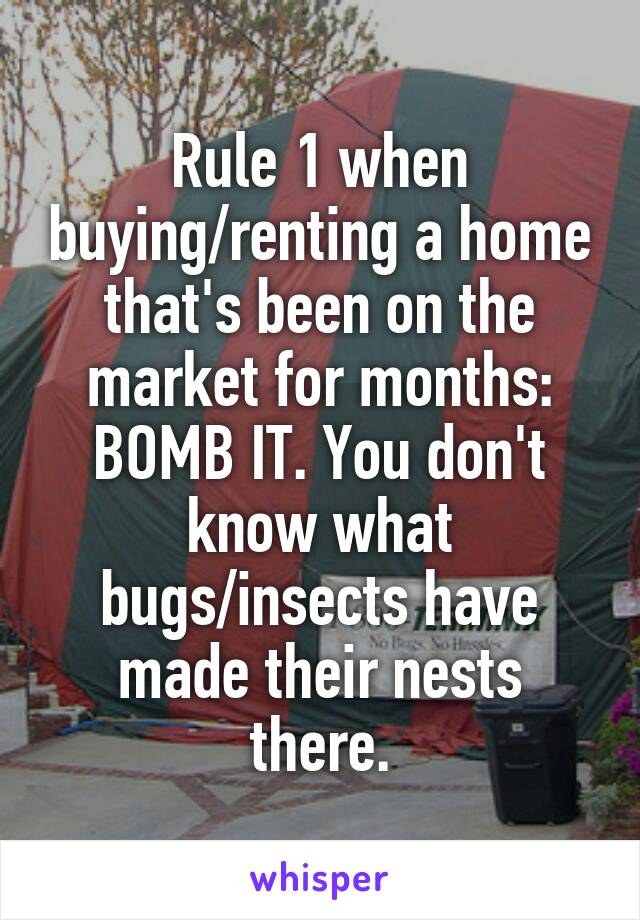 Rule 1 when buying/renting a home that's been on the market for months: BOMB IT. You don't know what bugs/insects have made their nests there.