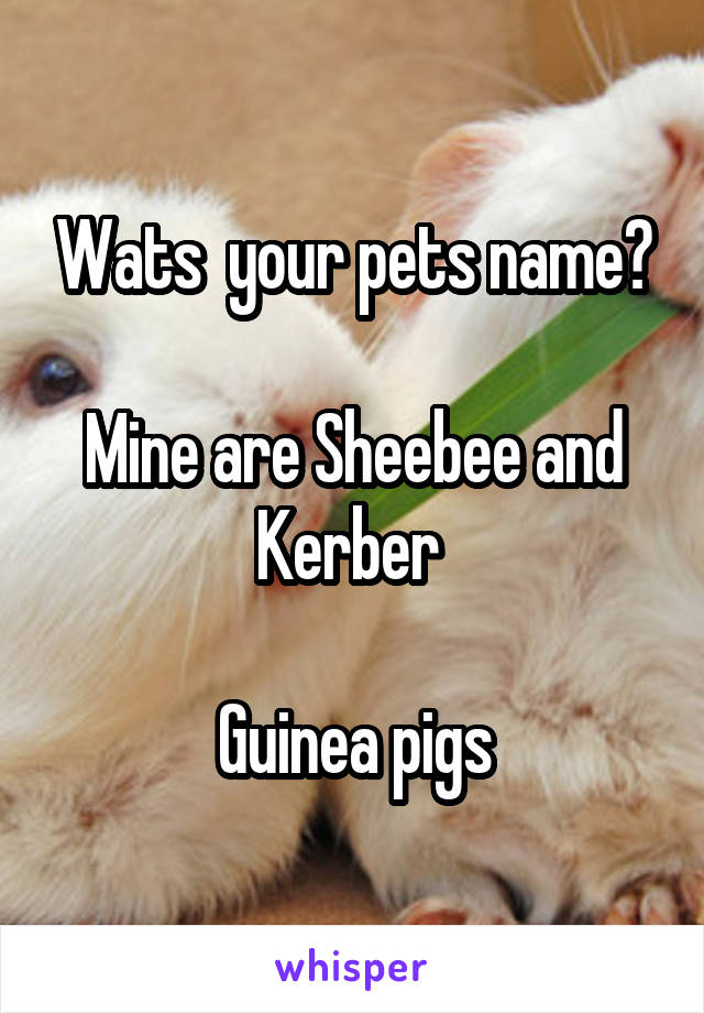 Wats  your pets name?  Mine are Sheebee and Kerber   Guinea pigs