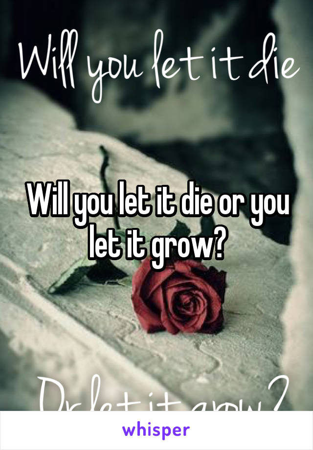 Will you let it die or you let it grow?