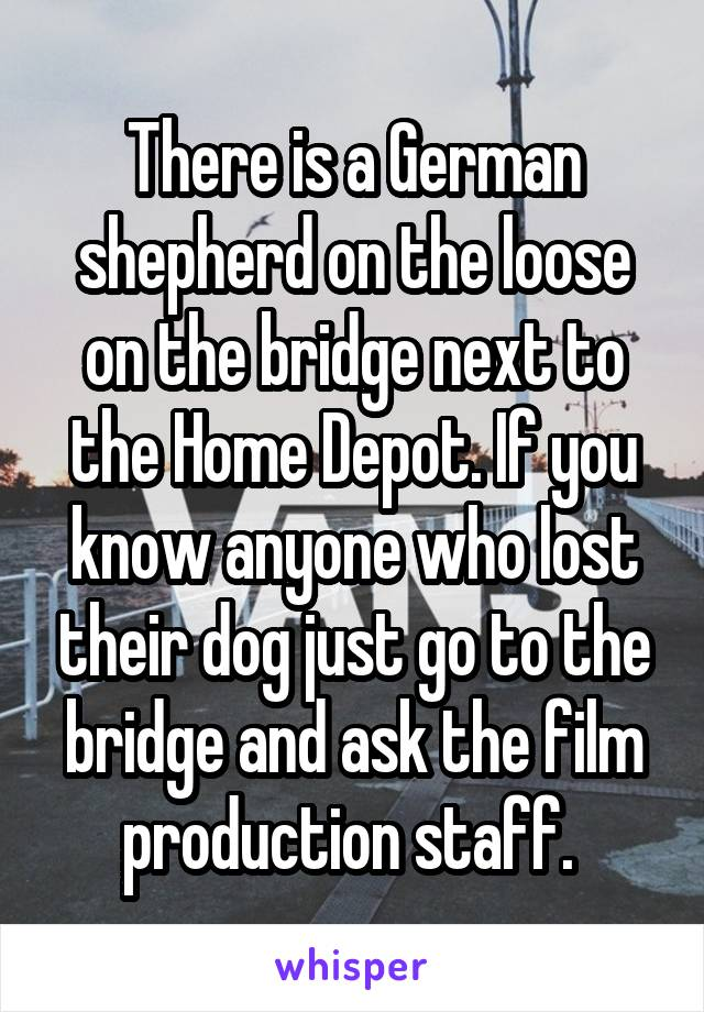 There is a German shepherd on the loose on the bridge next to the Home Depot. If you know anyone who lost their dog just go to the bridge and ask the film production staff.