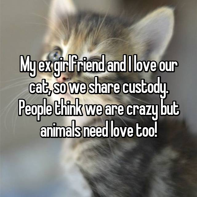 My ex girlfriend and I love our cat, so we share custody. People think we are crazy but animals need love too!