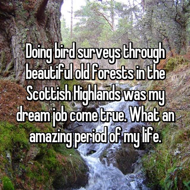 Doing bird surveys through beautiful old forests in the Scottish Highlands was my dream job come true. What an amazing period of my life.