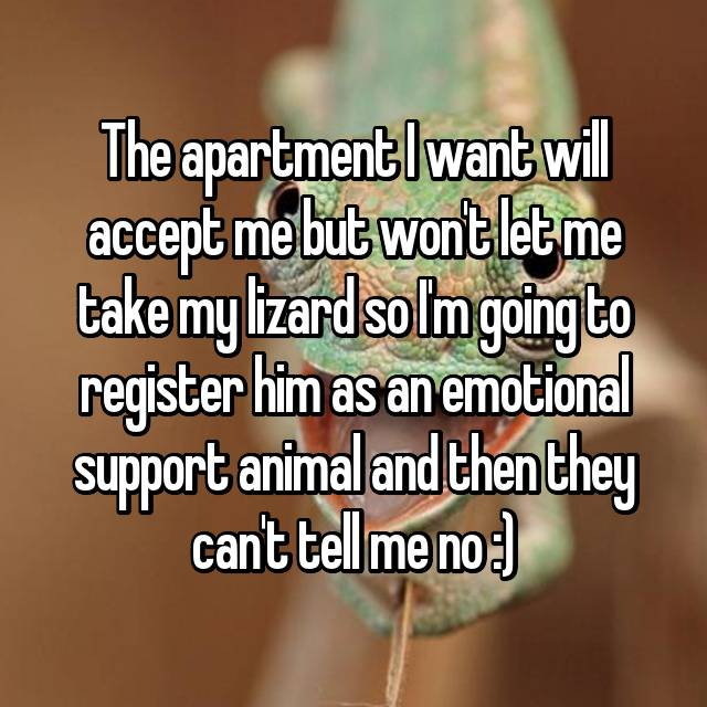The apartment I want will accept me but won't let me take my lizard so I'm going to register him as an emotional support animal and then they can't tell me no :)