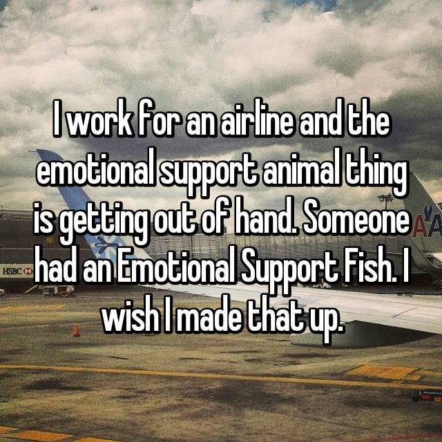 I work for an airline and the emotional support animal thing is getting out of hand. Someone had an Emotional Support Fish. I wish I made that up.