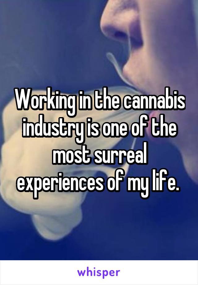 Working in the cannabis industry is one of the most surreal experiences of my life.