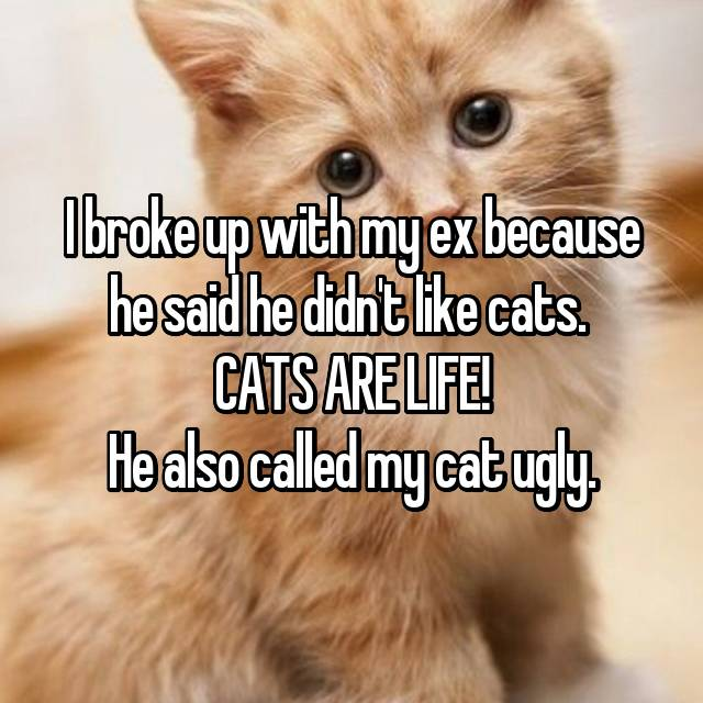 I broke up with my ex because he said he didn't like cats.  CATS ARE LIFE! He also called my cat ugly.