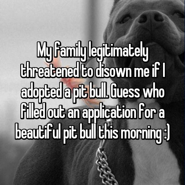 My family legitimately threatened to disown me if I adopted a pit bull. Guess who filled out an application for a beautiful pit bull this morning :)