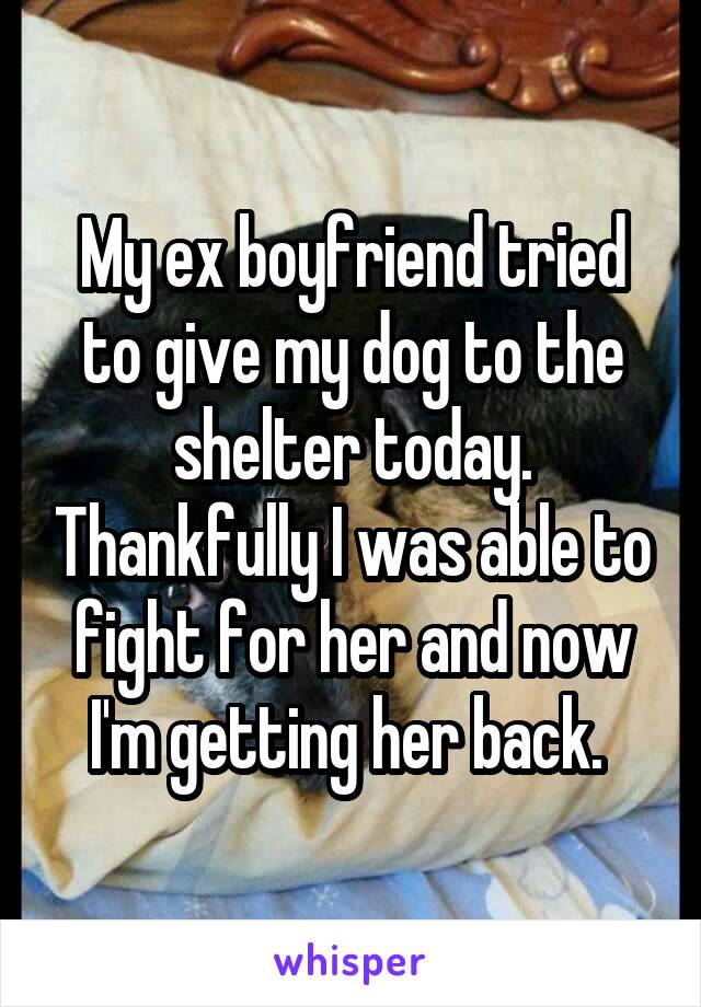 My ex boyfriend tried to give my dog to the shelter today. Thankfully I was able to fight for her and now I'm getting her back.