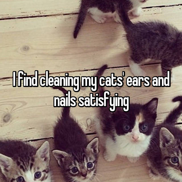 I find cleaning my cats' ears and nails satisfying