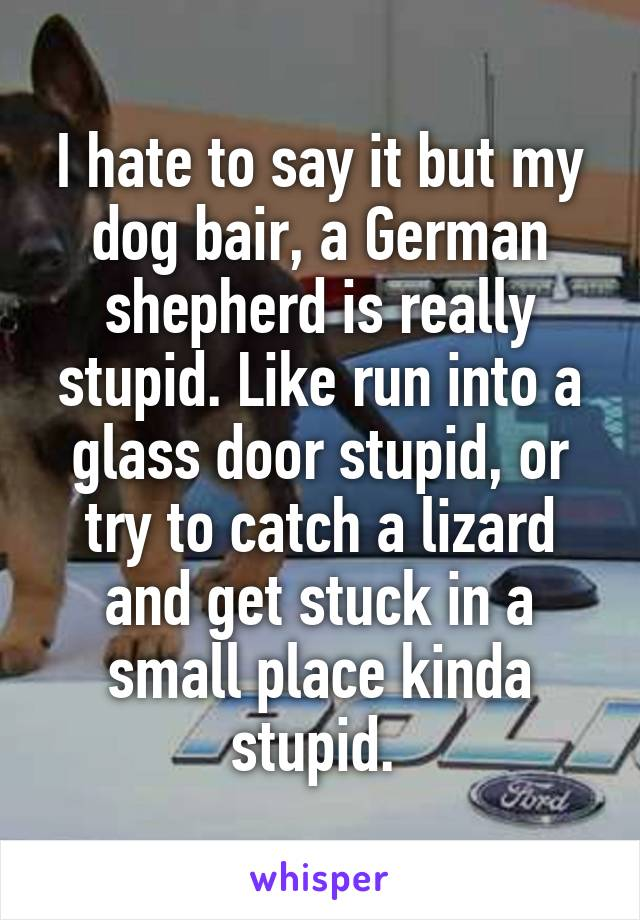I Hate To Say It But My Dog Bair A German Shepherd Is Really Stupid