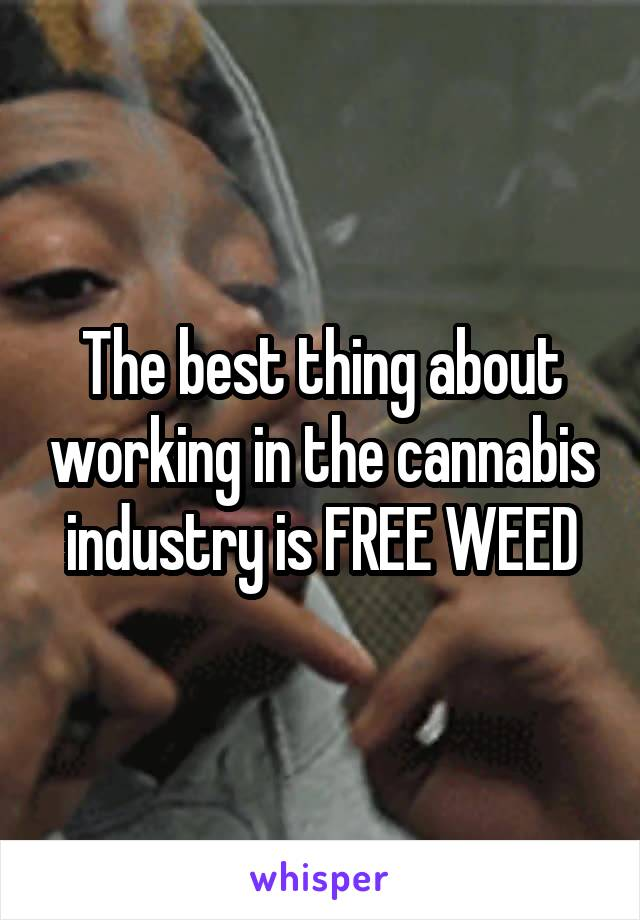 The best thing about working in the cannabis industry is FREE WEED