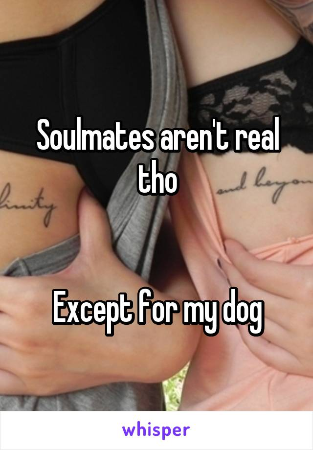 Soulmates aren't real tho   Except for my dog