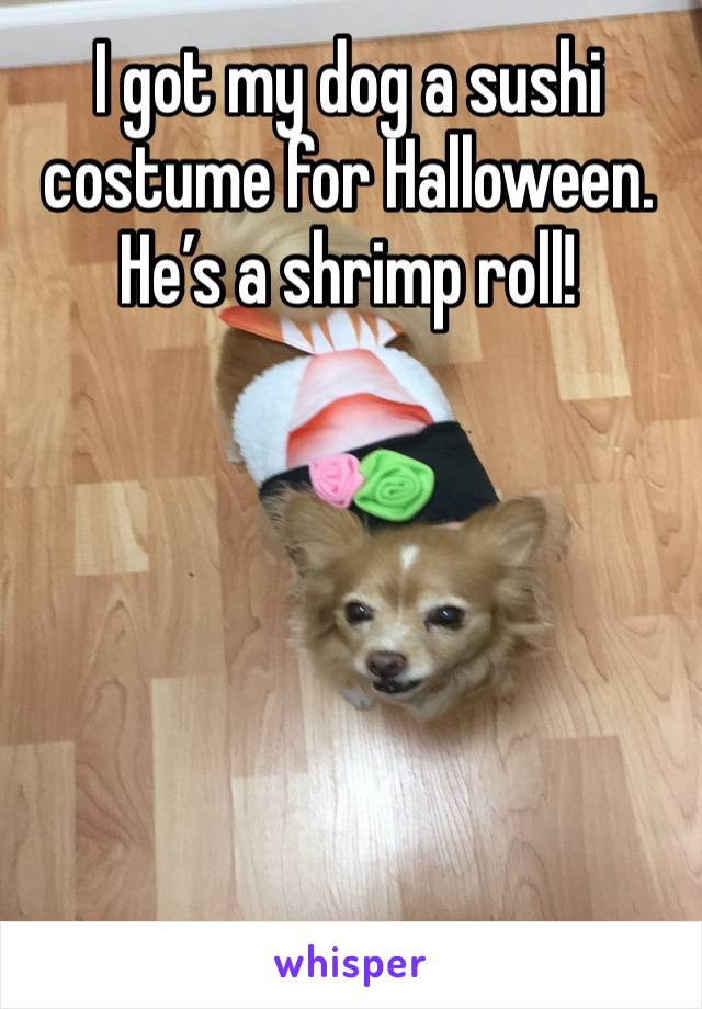 I got my dog a sushi costume for Halloween. He's a shrimp roll!