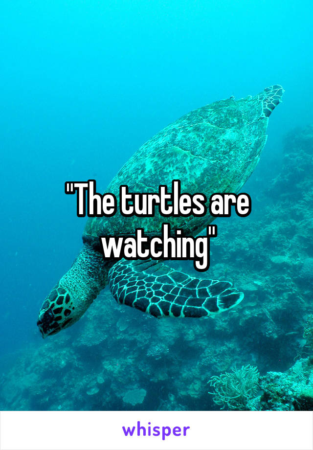 """""""The turtles are watching"""""""