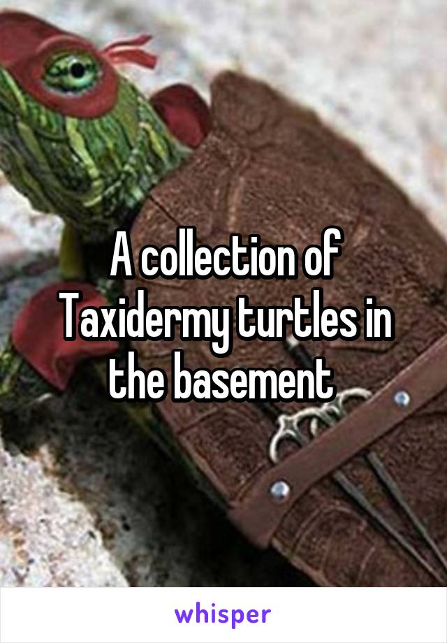 A collection of Taxidermy turtles in the basement