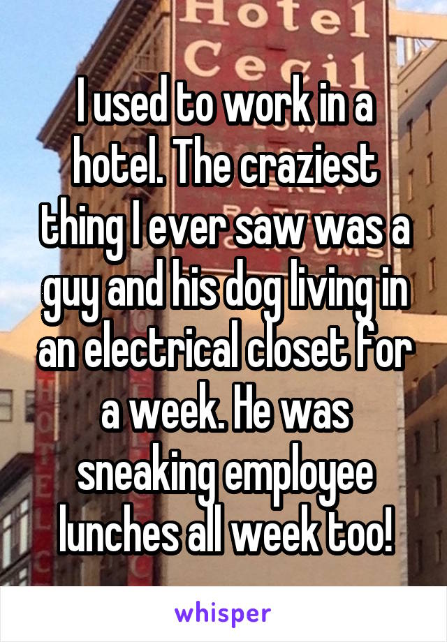 I used to work in a hotel. The craziest thing I ever saw was a guy and his dog living in an electrical closet for a week. He was sneaking employee lunches all week too!
