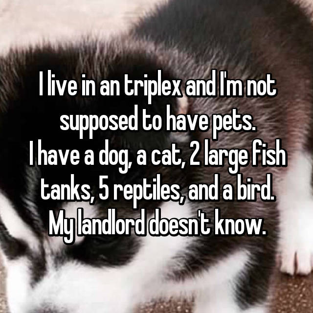 I live in an triplex and I'm not supposed to have pets. I have a dog, a cat, 2 large fish tanks, 5 reptiles, and a bird. My landlord doesn't know.