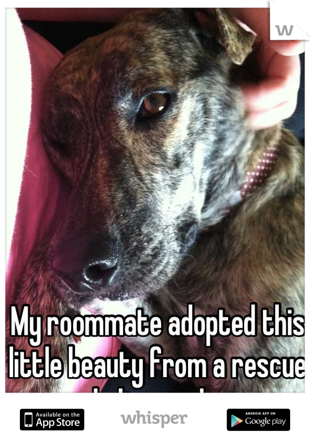 My roommate adopted this little beauty from a rescue shelter today.