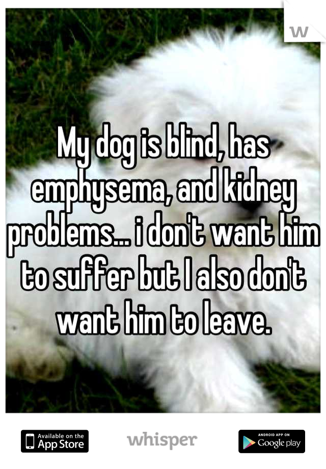 My dog is blind, has emphysema, and kidney problems... i don't want him to suffer but I also don't want him to leave.
