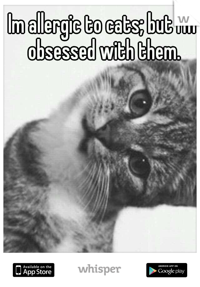 Im allergic to cats; but i'm obsessed with them.