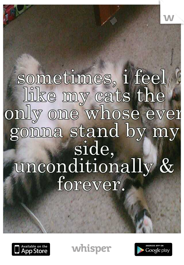 sometimes, i feel like my cats the only one whose ever gonna stand by my side, unconditionally & forever.