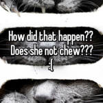 How did that happen??  Does she not chew??? :(