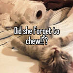 Did she forget to chew!??