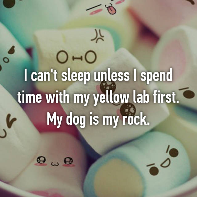 I can't sleep unless I spend time with my yellow lab first. My dog is my rock.