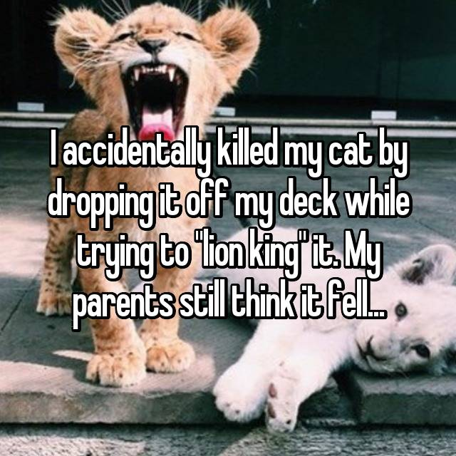 "I accidentally killed my cat by dropping it off my deck while trying to ""lion king"" it. My parents still think it fell..."